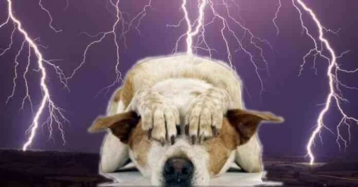 Cane che ha paura durante un temporale