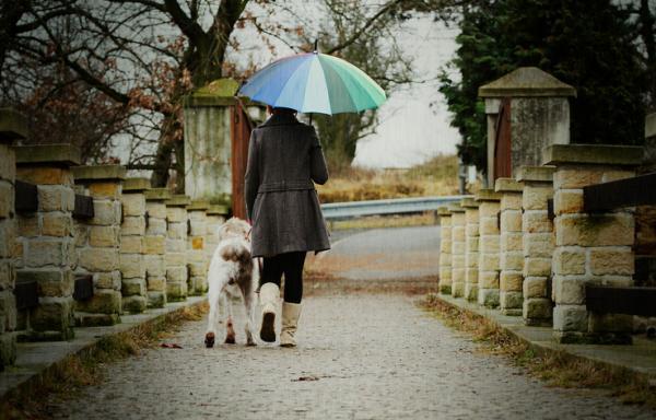 Cane che passeggia sotto la pioggia