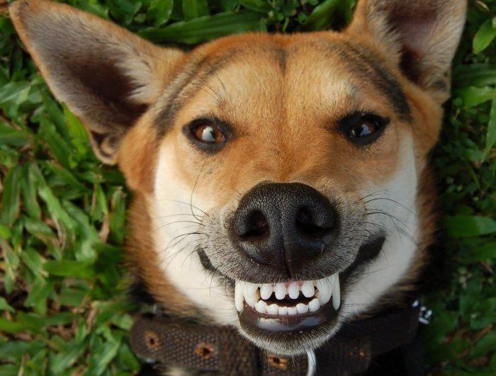Maggio è il mese dell'igiene orale del cane: tutto ciò che c'è da sapere