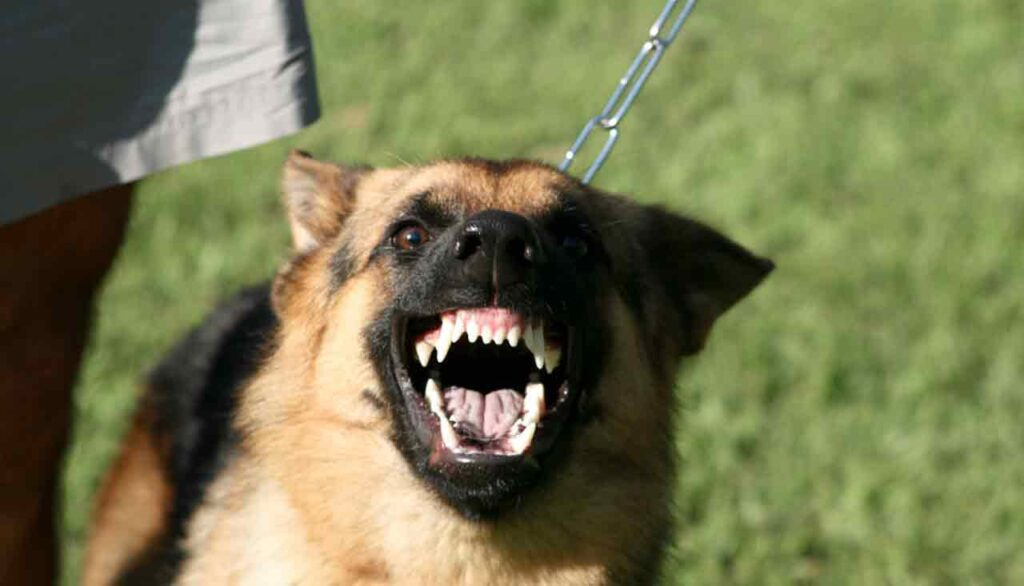 Facebook usata per promuovere combattimenti tra cani: è polemica