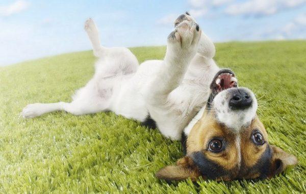 Cani: le risposte ai tre più grandi perchè relativi al loro comportamento