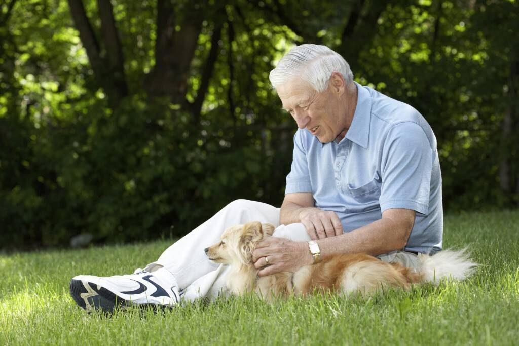 Cani anziani: il progetto della loro secondo vita con i pensionati