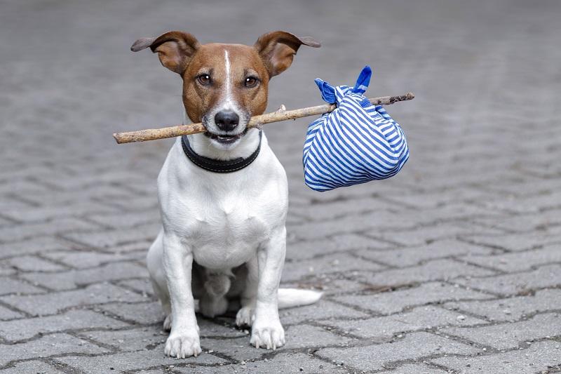 Cane con in bocca un bastoncino di legno
