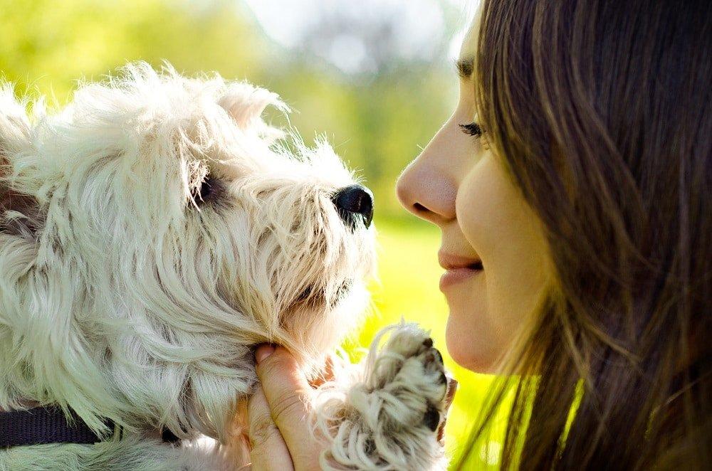 Cane con la sua padrona