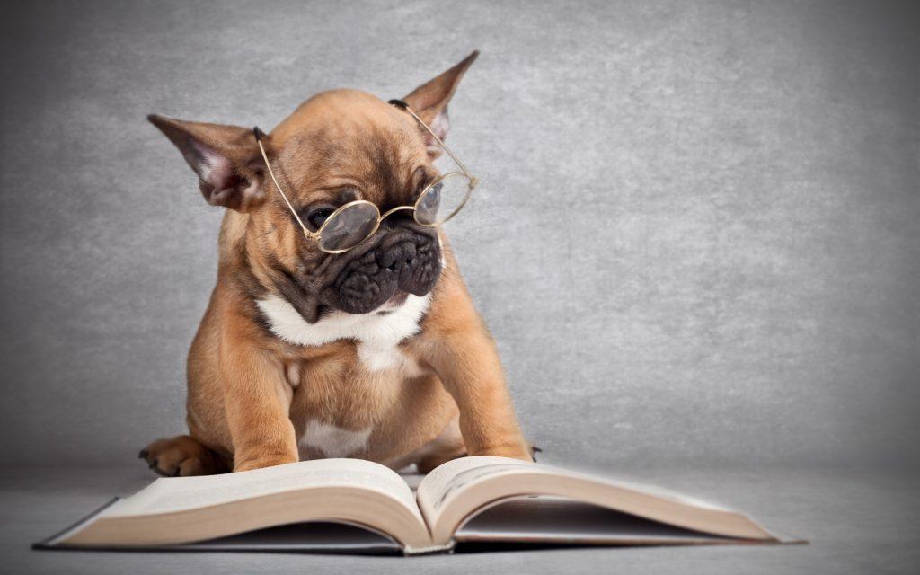 A cosa pensano i cani? Una ricerca scientifica svela il mistero