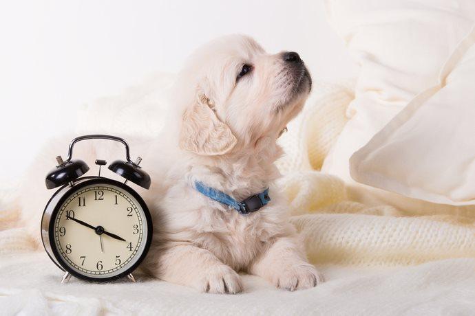 Cane con un orologio