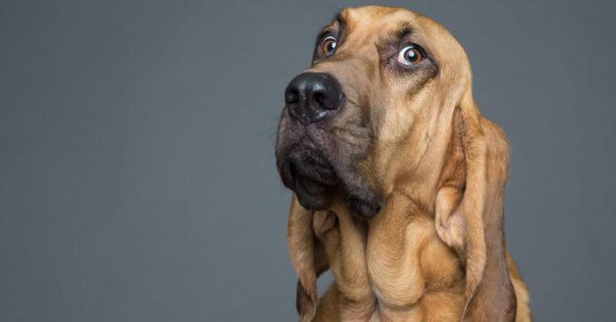 Cane con una buffa espressione