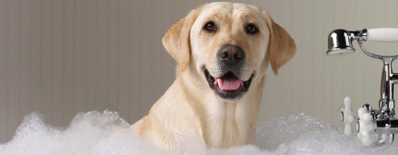 Bagno al cane: ogni quanto tempo va fatto? Tutto ciò che c'è da sapere