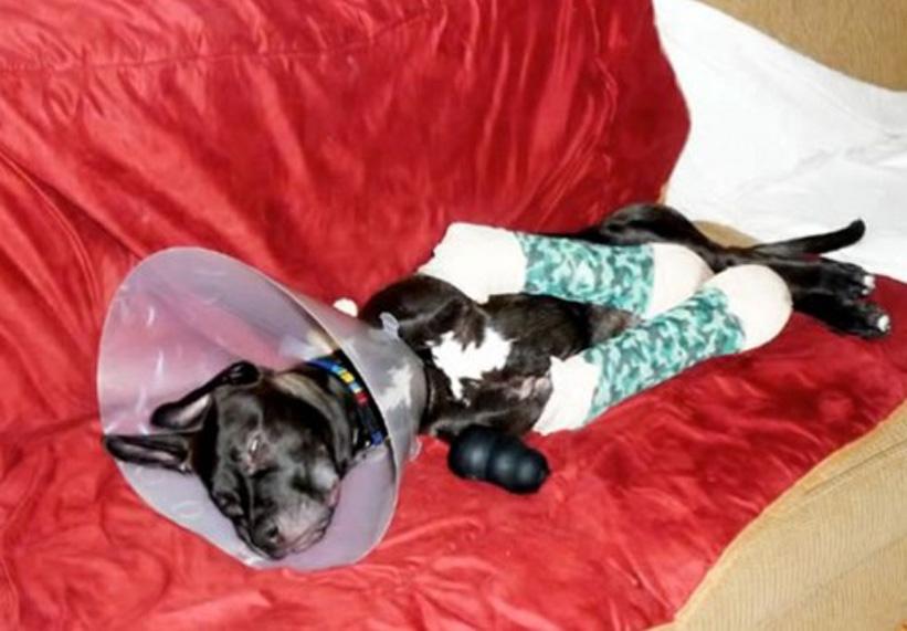 Charlie, il cane abbandonato per un difetto alle zampe, ha la sua rivincita
