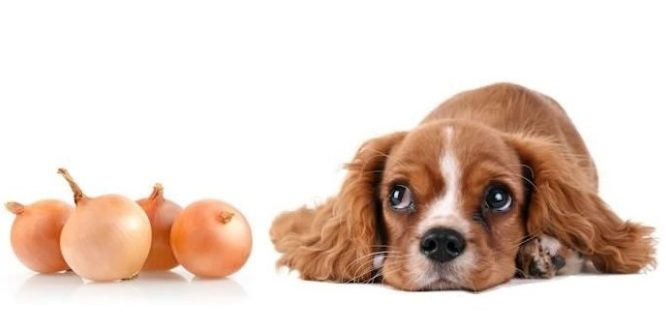 Cani in pericolo: cose che abbiamo in casa che potrebbero essergli nocive