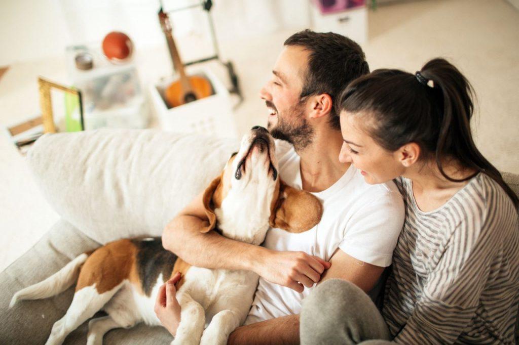 Cane felice con i suoi padroni