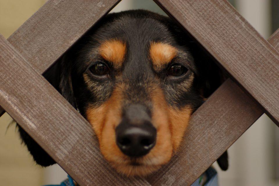 Cani: alcune curiosità sui nostri amici a quattro zampe