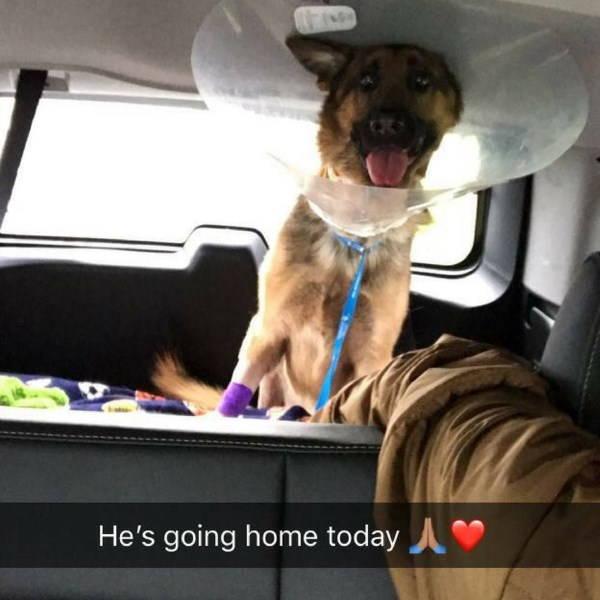 Cane in riabilitazione