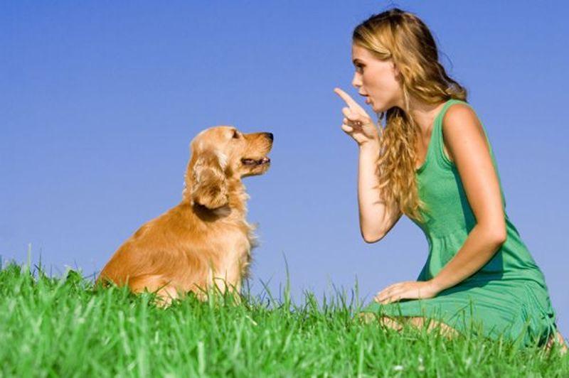 Cane insieme alla sua padrone in un prato