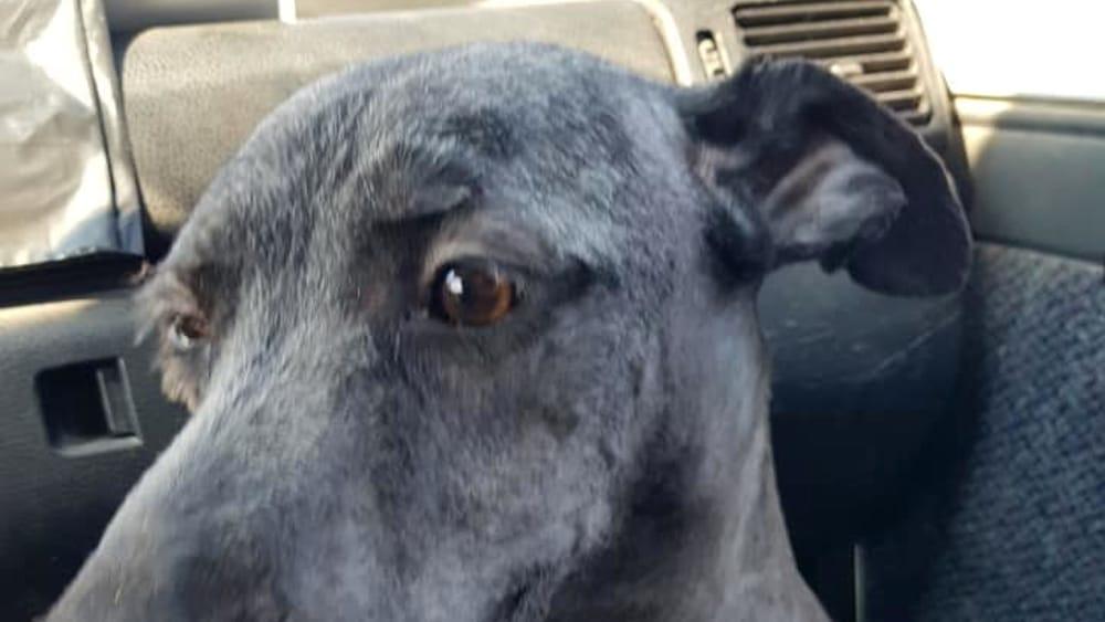 La storia di Sam, il cane picchiato e gettato in un cassonetto