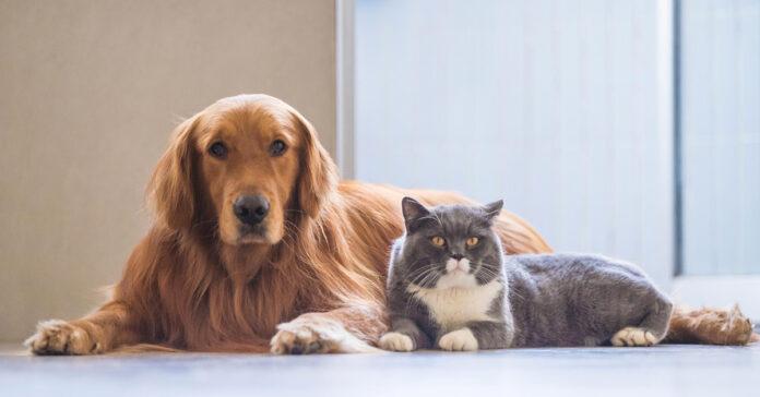 Cane sdraiato accanto ad un gatto