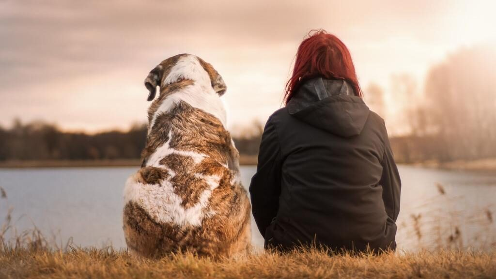 Cane seduto accanto alla padrona