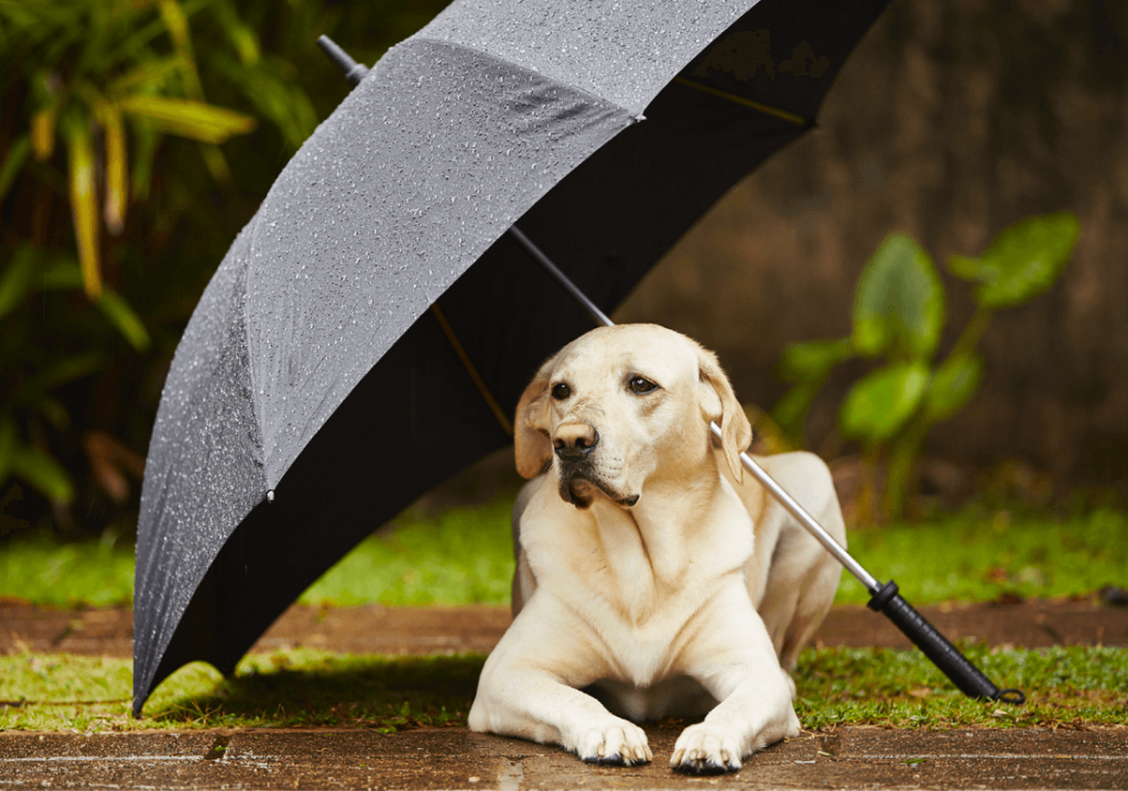 Cane sotto un ombrello