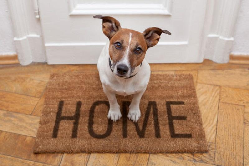 Cane sul tappeto di casa