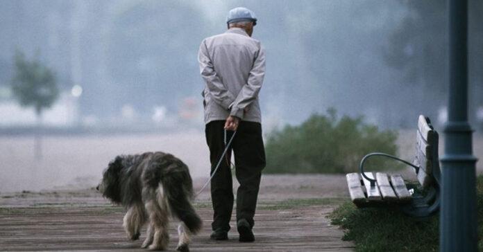 Cani anziani il progetto della loro secondo vita con i pensionati