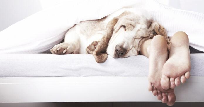 Cani contro l'insonnia secondo la scienza ci aiutano a dormire meglio