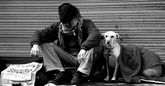 Cani dei Clochard a Milano arriva l'assistenza veterinaria gratuita
