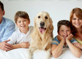 Cani e divorzio arriva l'affido condiviso per le coppie che si separano