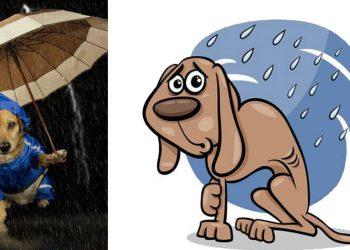 Cani e pioggia perchè odiano camminare durante un temporale
