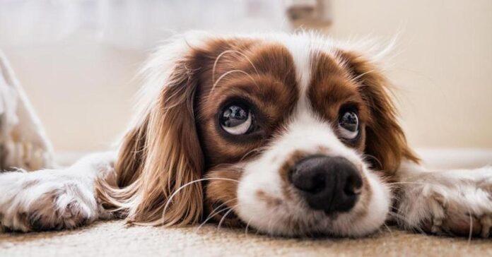 Cani e tono di voce perchè lo cambiamo quando parliamo con loro
