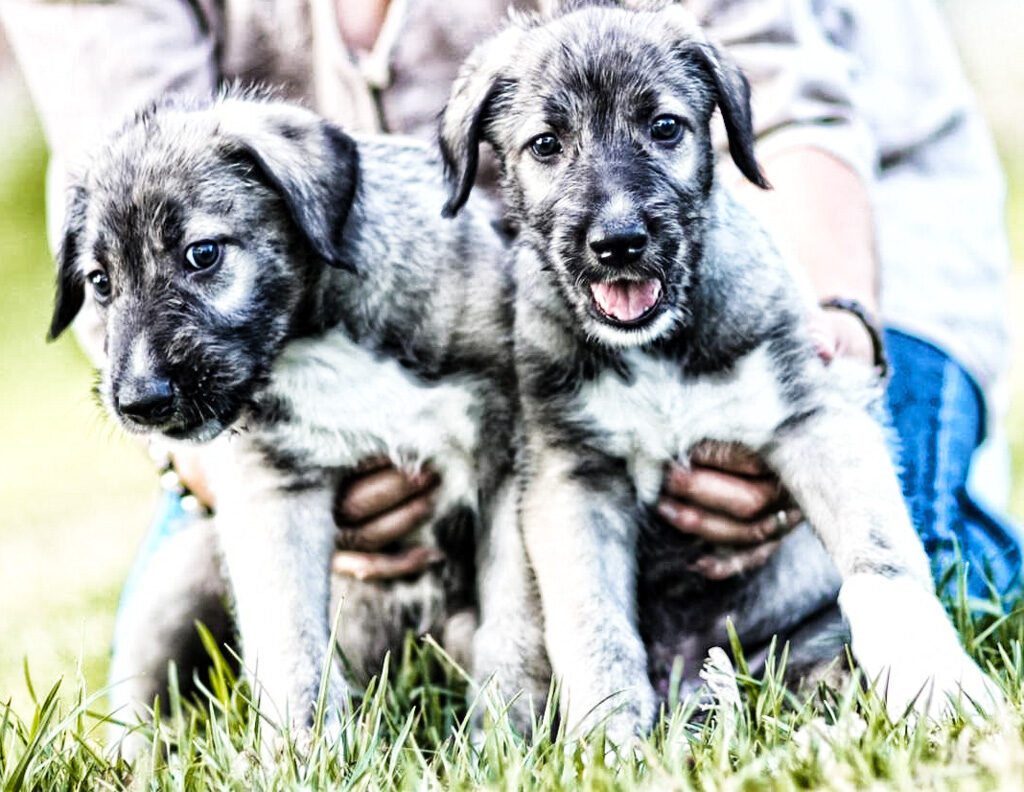 Cani fratelli