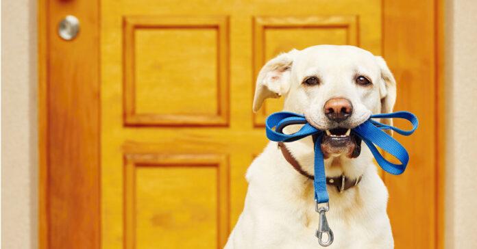 Cani in condominio tutto ciò che c'è da sapere sulla legge in questione