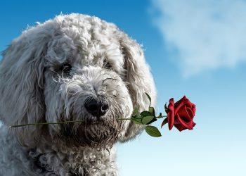 Cani in missione cupido secondo la scienza fanno anche trovare l'amore