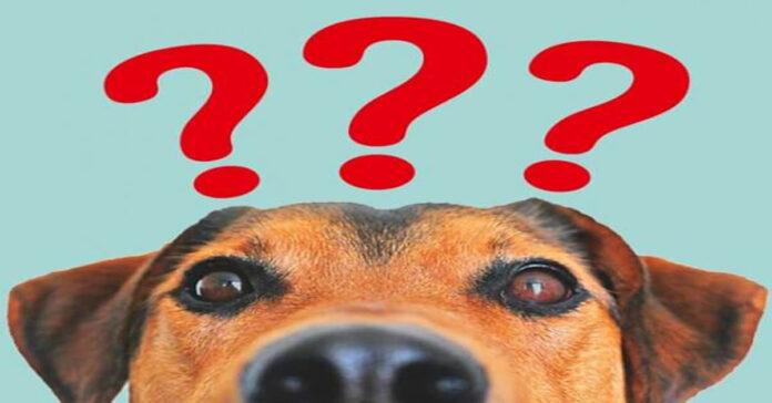 Cani le risposte ai tre più grandi perchè relativi al loro comportamento
