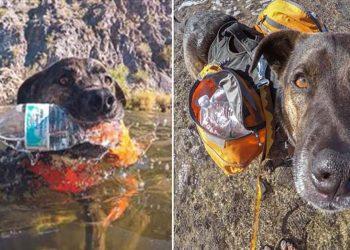 Chipper, il cane che raccoglie la spazzatura e contribuisce alla differenziata