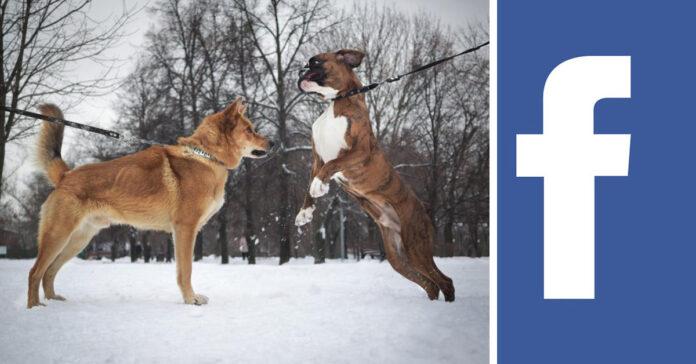 Combattimento tra cani Facebook