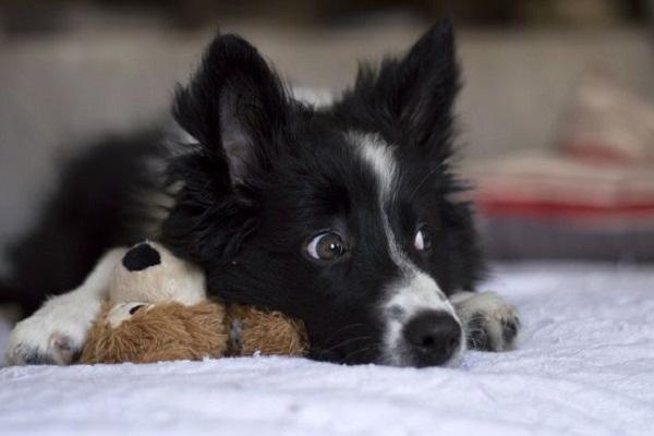 Come abituare il cane a fare i bisogni sulla traversina