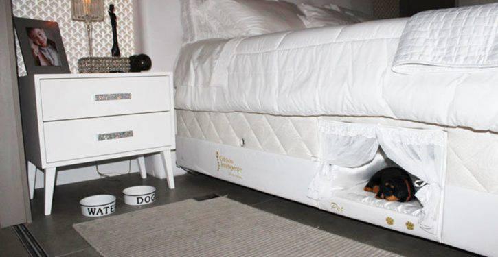 Dormire con il cane: dimmi come lo fai e ti dirò che rapporto avete