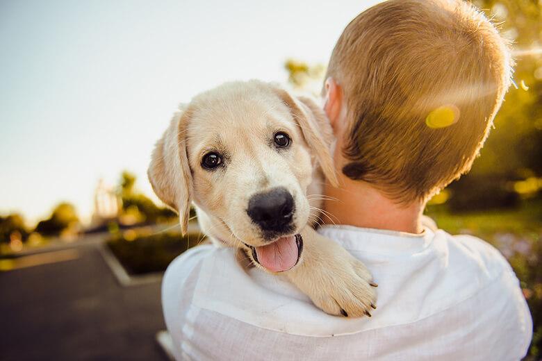 Cucciolo di cane felice con un bambino