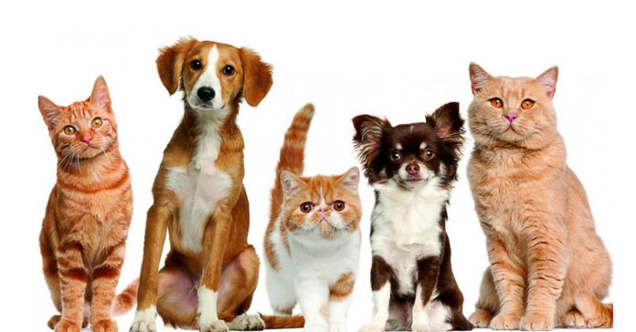 Divieto di mangiare cani e gatti finalmente arriva la proposta di legge