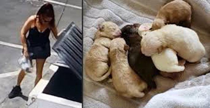 Donna che getta i cuccioli di cane nell'immondizia