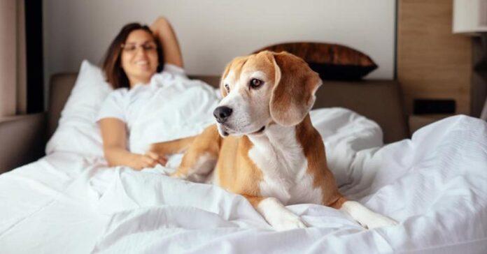 Dormire con il cane dimmi come lo fai e ti dirò che rapporto avete