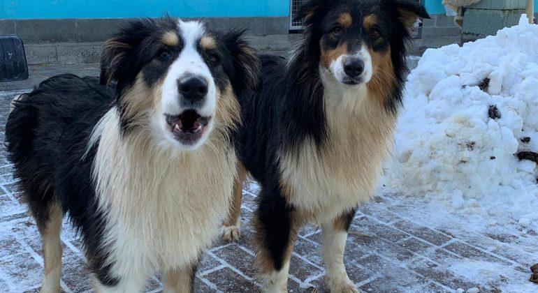 Due cani felici tra la neve