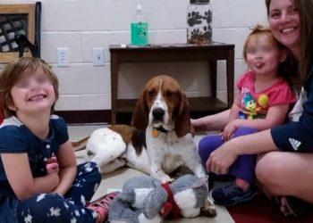 Edgar, il cane eroe che ha salvato 3 bambine da un rapimento