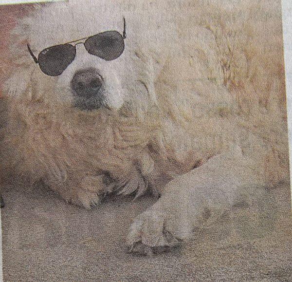 Fofò, il cane che non è sopravvissuto al dolore della perdita della padrona