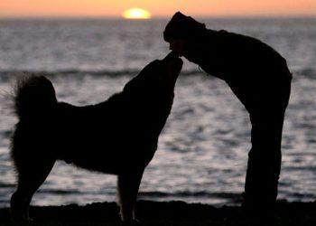 I cani amano l'uomo più dei loro simili la conferma arriva dalla scienza