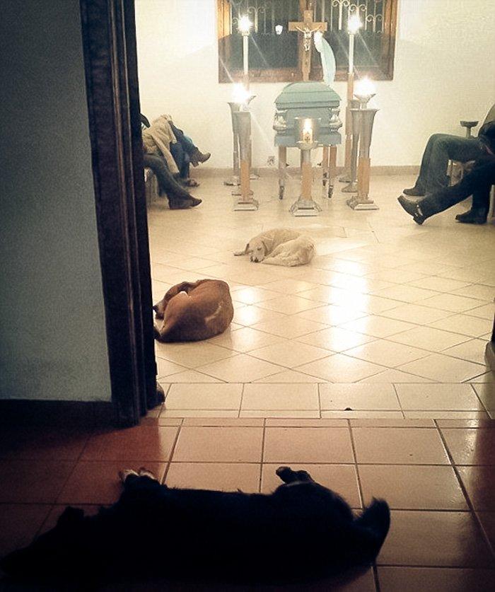 I cani randagi le rendono omaggio: la storia di Margarita Suarez