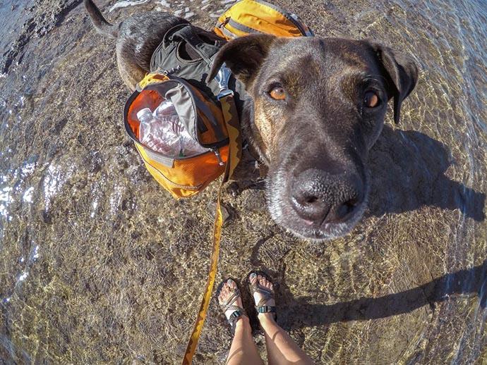 Il cane Chipper raccoglie la plastica