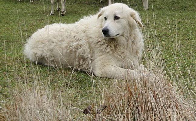 Il cane Fofò