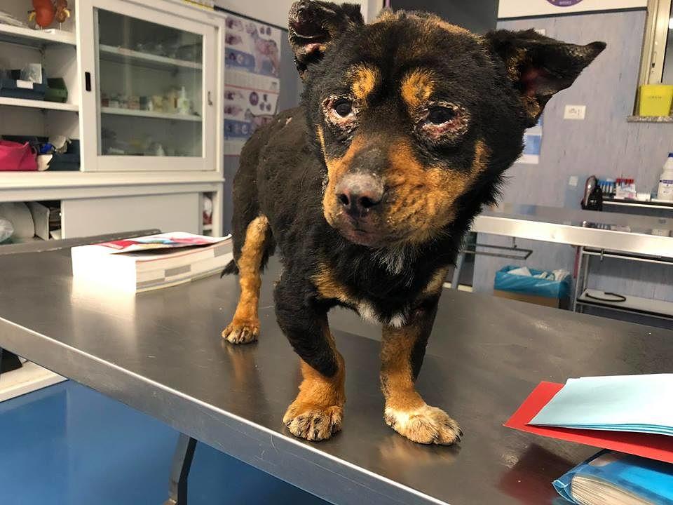 Il cane Fuego durante il percorso di cura