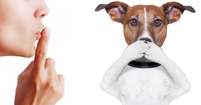 Il cane abbaia e i vicini rompono E' un suo diritto lo ha stabilito un giudice